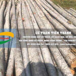 Bán Cây chống bạch đàn TPHCM, Cột chống gỗ bạch đàn Giá rẻ