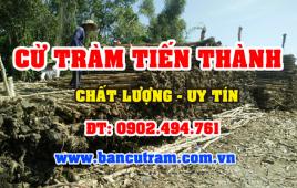 * Lưu ý khi lựa chọn địa chỉ bán cừ tràm tại TPHCM