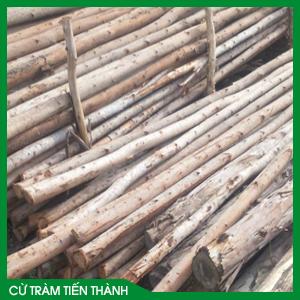 Cừ Bạch Đàn 7,5m Gốc 14cm-16cm – Báo giá cây chống Bạch Đàn