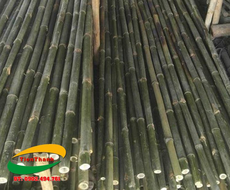 Báo giá bán cây tầm vông | Bán cây tầm vông giá rẻ TPHCM